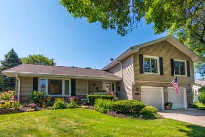 Schaumburg Single Family Home For Sale: 811 Blenheim Drive