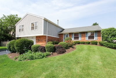 Lake Zurich Single Family Home For Sale: 975 Old Mill Grove Road