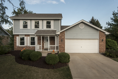 Tinley Park Single Family Home New: 16613 Manchester Street