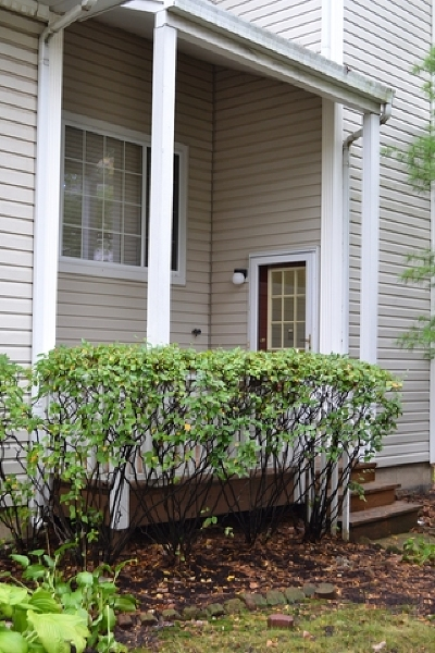 Hanover Park Condo/Townhouse Contingent: 6294 Nugget Circle