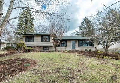 Lisle Single Family Home Contingent: 5249 Oakview Drive