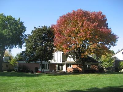 Burr Ridge Single Family Home For Sale: 8143 Kathryn Court