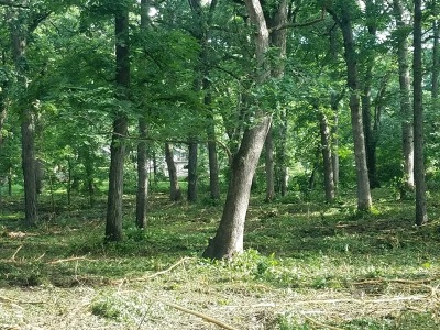 Woodstock Residential Lots & Land For Sale: 14506 L North Emery Lane North East