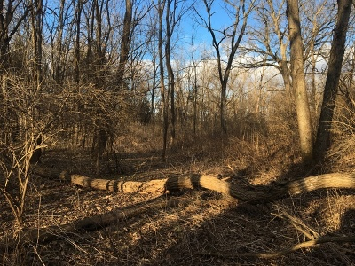 Ogle County Residential Lots & Land For Sale: 000 West Edgewood Road