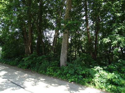 Lake In The Hills Residential Lots & Land For Sale: 207 Plum Street