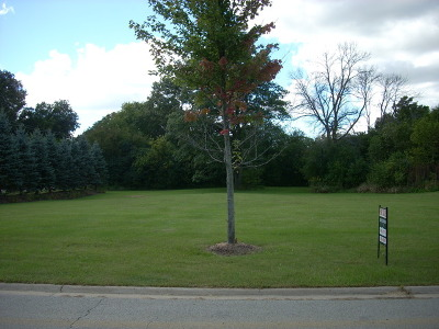 Homer Glen Residential Lots & Land For Sale: 000 Skender Court South