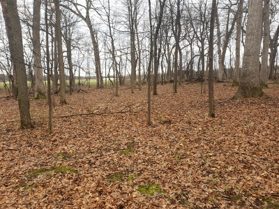 Ogle County Residential Lots & Land For Sale: Lot 4 South Knoll Road