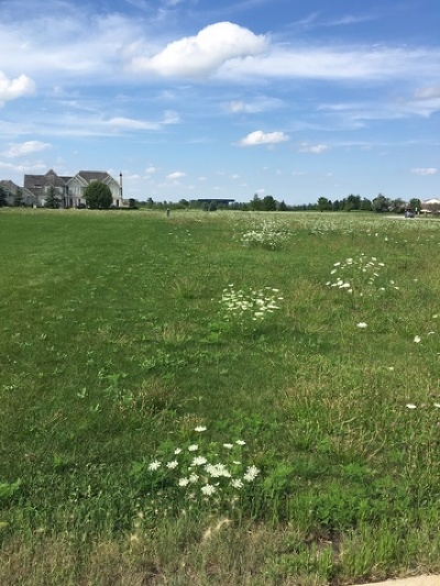 Tinley Park Residential Lots & Land For Sale: 4 Messina Court