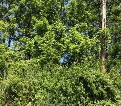 Algonquin  Residential Lots & Land For Sale: 000 Iona Terrace