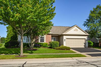Del Webb Sun City Single Family Home For Sale: 13153 Farm Hill Drive