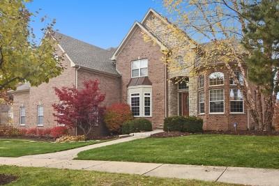 Palatine Single Family Home New: 580 West Ruhl Road
