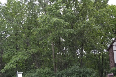 Homer Glen Residential Lots & Land For Sale: 12821 Pheasant Court
