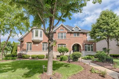 Bolingbrook Single Family Home New: 1229 Bush Boulevard
