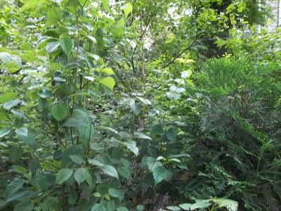 Chicago Residential Lots & Land New: 860 North Richmond Street