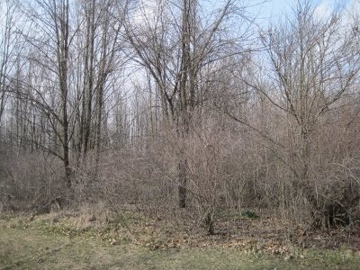 Residential Lots & Land For Sale: Fresh Air