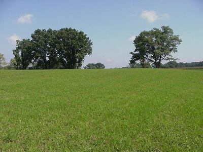 Butler Residential Lots & Land For Sale: County Road 71