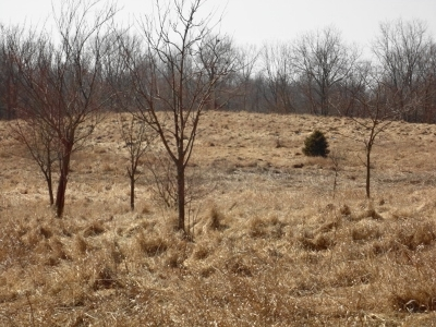 Angola Residential Lots & Land For Sale: Tract C N 425 W