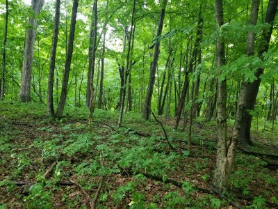 Moores Hill Residential Lots & Land For Sale: W County Line Rd