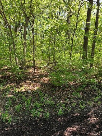 Clay County Residential Lots & Land For Sale: Lot 1 Hemlock Court