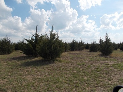 Winfield Residential Lots & Land For Sale: 811 Vanday Rd