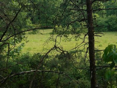 Carter County Residential Lots & Land For Sale: 887 Fields Branch Road
