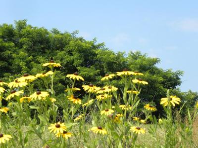 Spencer County Residential Lots & Land For Sale: LOT 31 Strike Hound Ct