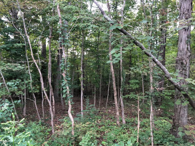 Mt Washington Residential Lots & Land For Sale: Lot 21 Hollow Hills Rd