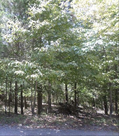 Meade County Residential Lots & Land For Sale: Lot 652 Strawberry Hill Drive