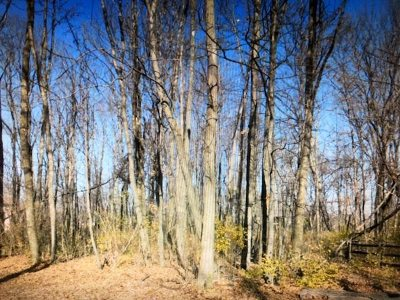 Union Residential Lots & Land For Sale: 6 Omaha Trace