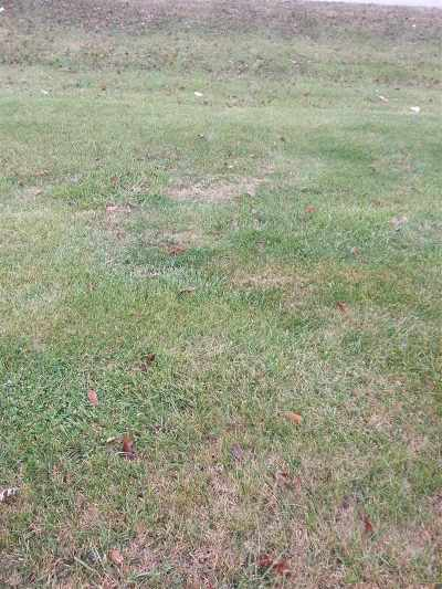 Bowling Green Residential Lots & Land For Sale: 1159 Teal Street