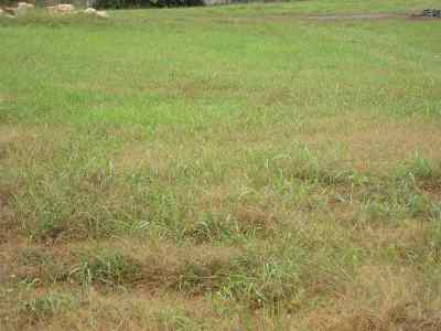 Bowling Green Residential Lots & Land For Sale: Lot 77-6 Dunbarton Avenue