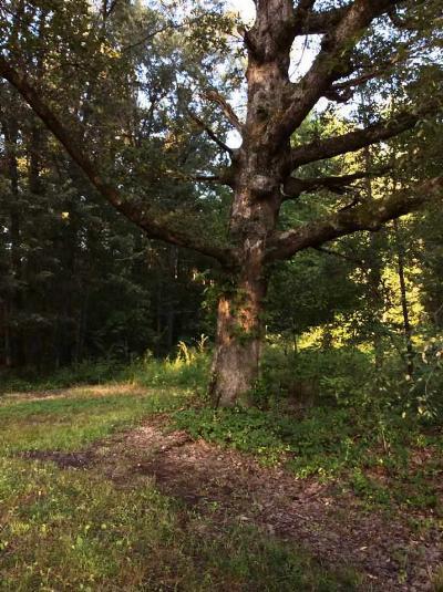 McCracken County Residential Lots & Land For Sale: Palestine School Road