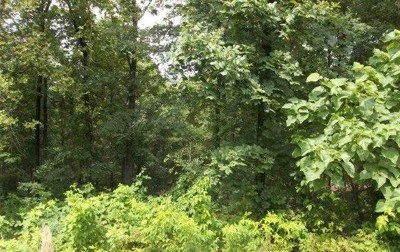 Murray KY Residential Lots & Land For Sale: $20,000