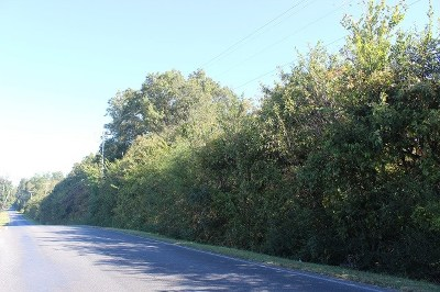 Calloway County Residential Lots & Land For Sale: Bailey Road