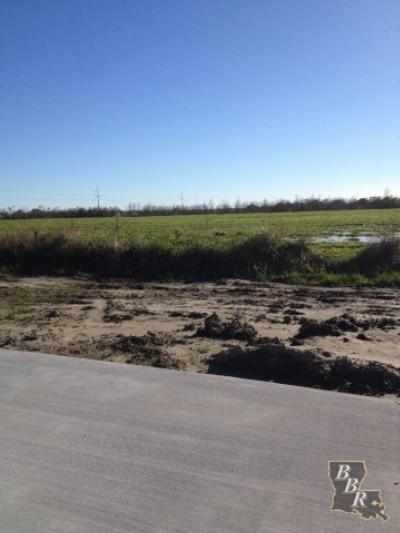 Terrebonne Parish, Lafourche Parish Residential Lots & Land For Sale: 2310 Parish Road