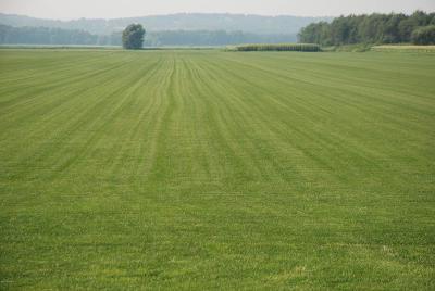 St Landry Parish Farm For Sale: Hwy 754