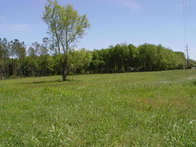 Acadia Parish Residential Lots & Land For Sale: Stakes Road