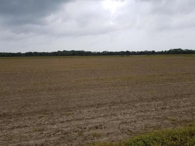 Farm For Sale: Tbd Oak Rd & Hwy 358