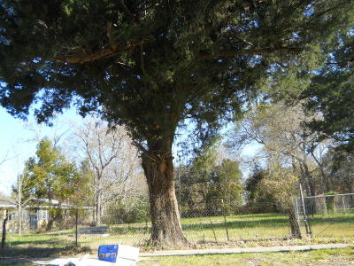 Iberia Parish Residential Lots & Land For Sale: 623 Charles Street