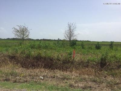 Cameron Parish Residential Lots & Land For Sale: Lots 15, 16 Par Rd 120