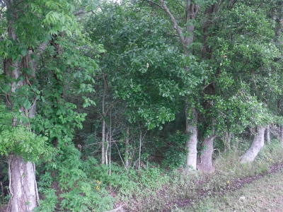 Residential Lots & Land For Sale: La Hwy 383
