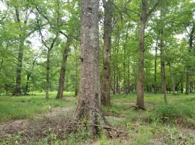 Natchitoches Parish Residential Lots & Land For Sale: Craig Bell Road