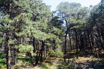 Truro Residential Lots & Land For Sale: 7 Lauras Way