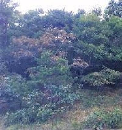 Truro Residential Lots & Land For Sale: 6 Andrew Way