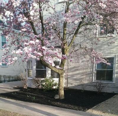Brookline Rental For Rent: 44 York Terrace
