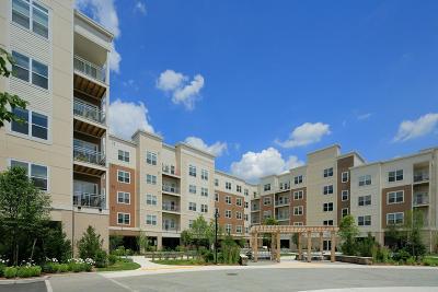 Arlington Rental For Rent: 30 Mill St #109