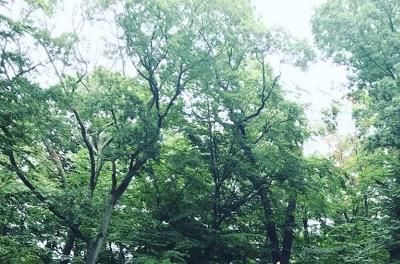 Brookline Residential Lots & Land For Sale: 74 Sargent Beechwood