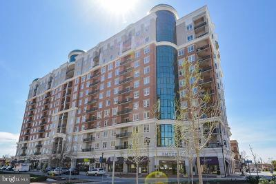 Anne Arundel County Condo For Sale: 1915 Towne Centre Boulevard #702