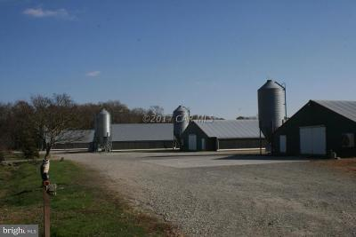 Worcester County Farm For Sale: 1023 Colona Road