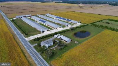 Farm For Sale: 24735 Nine Foot Road